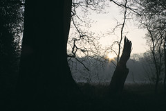 sunrise in the forest (Jos Mecklenfeld) Tags: forest wald bos sunrise sonnenaufgang zonsopkomst nature natur natuur meebos mist fog sonya6000 sonyilce6000 minoltamdwrokkor35mmf28 minoltamd minoltalens minolta