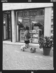 NCP_026 (nocrop.project) Tags: ncp nocropproject filmphotography filmisnotdead grainisgood istillshootfilm monochrome blackandwhite analogue photography darkroom neorealism streetphotography ordinarylife macerata italy mediumformat kodak trix fuji ga 645 120film dogs feline girl with fomadon r09 rodinal