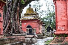 Shrines 3038 (Ursula in Aus (Resting - Away)) Tags: asia kathmandu nepal pashupatinath ggphotoworkshop