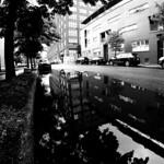 Rue Shearer Reflections thumbnail
