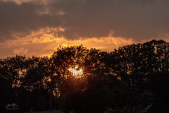 Trees in Silhouette (John Woodward Photography) Tags: sky skyclouds silhouettes sunset shropshire nature mothernature evening canon canondslr canoneos canonllenses canon5dmarkiv llenses