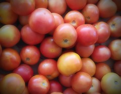 tomato - full of vitamin A (j0035001-2) Tags: fruit plant tree singapore garden vitamin tropical orange tomato vegetable food nature