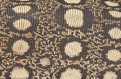 "Perentie (Varanus giganteus) (Gus McNab) Tags: perentie varanusgiganteus reptile reptiles herp herpetofauna herpetology lizard lizards sauria goanna monitor varanid varanidae australia ""australian reptiles"" reptile"" lizards"""