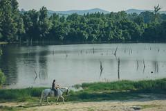 Dunavac (freyavev) Tags: danube dunav dunavac ribarskoostrvo liman novisad vojvodina serbia srbija horse horseriding vsco telelens fruskagora hills nature canon canon700d outdoor