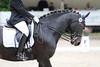 _MG_8105 (dreiwn) Tags: dressage pferd reitturnier turnierreiten pferdesport horse horseback horseriding equestrian reitverein dressurprüfung kandare doublebridle reiten pferde reitplatz ridingarena dressur dressuur