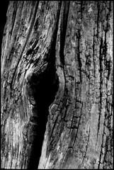 Noyen sur Sarthe (Sarthe) (gondardphilippe) Tags: noyensursarthe sarthe maine paysdelaloire noiretblanc nb noir blanc blackandwhite bw black white monochrome campagne extérieur quiet rural ruralité texture outdoor pieux pieu zen
