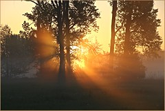 Mystic (der bischheimer) Tags: sonnenaufgang sunrise spreewald lübbenau lübben nebel fog dunst lausitz brandenburg canon derbischheimer