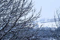 Easter Monday (rustyruth1959) Tags: nikon nikond5600 tamron16300mm uk england yorkshire calderdale ripponden home snow spring eastermonday tree weather branch view field trees farm