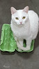 I'm an Egg (Monaggio) Tags: gato cat white blanco pet mascota egg huevo box caja huevera