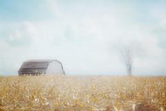 barn tree moment (Hal Halli....happy everything!!) Tags: rural farm barn tree landscape homedecor wallart minimalism