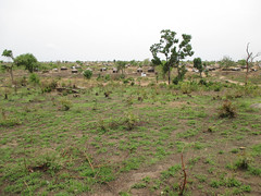 Bidibidi degraded 2 (FAO Forestry) Tags: fao un uganda refugees unhcr world bank environment energy south sudan woodfuel forestry
