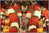7741 - Arupathu Moovar Festival, Mylai, 2018 (chandrasekaran a 49 lakhs views Thanks to all.) Tags: festivals india chennai mylapore culture traditions thirumurai panguni uthiram gnana sambandhar appar sundarar 63 nayanmars devotees arupabathu moovar festival travel அறுபத்துமூவர்திருவிழா பல்லக்கு canoneos6dmarkii tamronef28300mm recital panniruthirumurai கற்பகாம்பாள் கபாலீஸ்வரர் திருஞானசம்பந்தர்