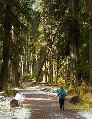 carbon river trail (Dan Hershman) Tags: mtrainiernationalpark rainforest carbonriver