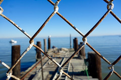 diamonds and pier (KevinIrvineChi) Tags: china camp state park san rafael pablo bay are area bayarea sunny bluesky rusty fence chainlinkfence chainlink poop bird sea gull gulls pier piers wood weathered bokeh depth field dof outdoors winter 2017 northerncalifornia horizon macro white brown ladder rope sony dscrx100 shallow birds avian fishing village hiostoric historic boingboing texture diamond dock