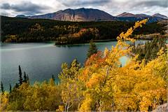 Emerald Lake_2684 (uwe_cani) Tags: kanada canada yukon natur natu see lake wasser water herbst autumn baum tree gelb yellow berge mountain himmel sky wolken clouds outdoor