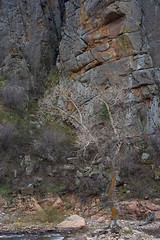 orangeLichen (blancopix) Tags: rock cliff bare tree orange lichen river canyon nature