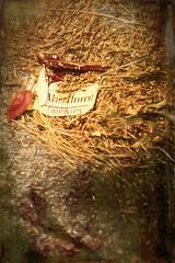 IMG_1148-Edit-Edit (rebecca haegele photography) Tags: red marlboro smokes packaday foundartifacts abandoned artifacts