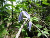 Rifugio Toesca - (17-06-18) 22 (Christian Perfumo) Tags: italia piemonte torino valdisusa natura escursione primavera primavera2018 2018 allaperto