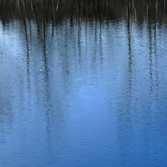 another point of blue (vertblu) Tags: mirroring mirrored reflection reflections reflectedskies reflectedtrees abstract abstrakt abstraction abstractsquared abstractreflections ripples rippling pond pondsurface pondscene pondlife bythepond water waterabstract watersurface bluewater blue brown bluebrown upsidedown distorted distortion vertblu bsquare 500x500 kwadrat