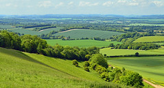Early summer, Inkpen, Berkshire, England (Oswald Bertram) Tags: northwessexdowns northwessexdownsaonb hampshiredowns verano été sommer green countryside rural country kennetvalley