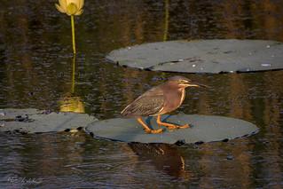 Dawn on Shoveler Pond
