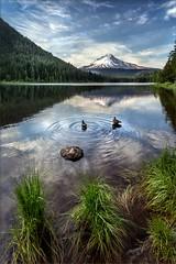 Trillium Duck Dance (TomGrubbe) Tags: lake trilliumlake oregon mountain mthood mounthood ducks summer pacificnorthwest landscape