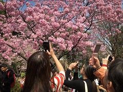 Ueno Park. Tokyo 上野恩賜公園 (H.L.Tam) Tags: uenopark cherryblossoms life iphoneography sketchbook 上野 iphone8plus 櫻花 street hltam 上野恩賜公園 tokyo streetphotography 日本 iphone 桜 documentary sakura japan japanese photodocumentary 東京 日本人 people