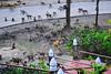 ,, Mama & Monkeys ,, (Jon in Thailand) Tags: monkeys dog k9 mama smilingdog dogsmiling wildlifephotography junglephotography jungle dogtail dogears green burgundy nikon d300 nikkor 175528 apes primates thespirithouse themonkeytemple monkeytails thailand nature littledoglaughedstories