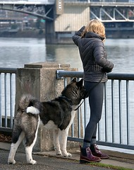 Looking Out (Scott 97006) Tags: woman blonde pretty dog pet animal river view akita