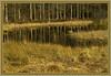 AH62_9500 (der_andyrandy) Tags: wald waldsee sumpf waldsumpf spiegelung gras wiese waldwiese