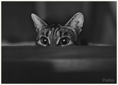 I'm watching you (pavelfadeevv) Tags: photo photography mood bw still art color monochrome blackandwhite stilllife beautiful beauty wooden vintage background light drink food fruit berries glass cup flowers nature coffee morning animals landscape