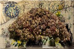 Cobijo (seguicollar) Tags: imagencreativa photomanipulación art arte artecreativo artedigital virginiaseguí bonsai árbol tree reloj mapa mujeres espaldas cobijo bajoárbol leaf leaves branch
