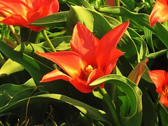 Spring is slowly arriving near Indianapolis halfway in April (kennethkonica) Tags: nature canonpowershot canon usa america midwest indianapolis indiana indy color outdoor wildlife spring red green