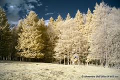 665nm_DSC1604 (achrntatrps) Tags: 665nm kolarivision photographe photographer alexandredellolivo dellolivo suisse nikon d5300 ir infrarouges lumière light licht luz jura