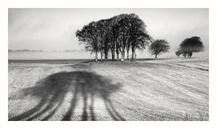Morning Shadow (Dylan Nardini) Tags: scotland southlanarkshire blackwhite morning shadow black white mono monochrome trees countryside rollinghills sunrise