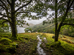 Doune Bothy (Ulmi81) Tags: scotland highlands west highland way loch lomond doune bothy walk walking hike hiking path trees adventure nature wet rain weather green perspective moss water between opening gate natural