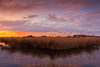 A village in the reed (Bernhard Sitzwohl) Tags: reed reedgrass lake lakeneusiedl sunset landscape nature outdoor leefilter greatphotographers c red dusk neusiedlersee insta delfino