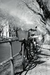 bike with bokeh@Kö, Düsseldorf (Amselchen) Tags: bicycle trees sky mono monochrome blackandwhite bnw light shadow bokeh blur dof depthoffield fujifilm fujifilmxseries fujifilmxt2 xf35mmf2rwr