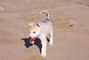 Husky siberiano en la playa (NFY417) Tags: husky siberianhusky perro mascota ojos playa sol