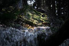 Waldlicht (Gruenewiese86) Tags: harz ostern wald wälder wandern waldlandschaft waldlandschaften waldboden wanderung canon 6d deutschland