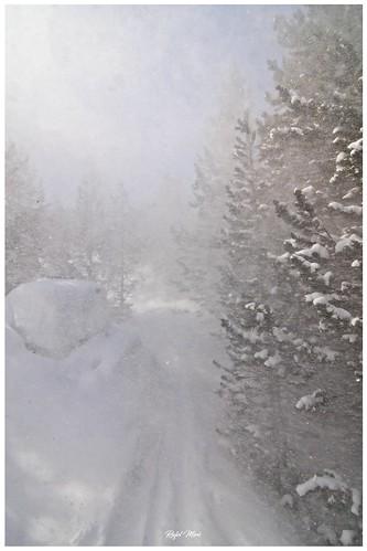 Tempesta de neu dins el bosc