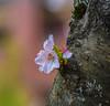 Outside. (Omygodtom) Tags: flickr flower flickriver bokeh blossom nikon70300mmvrlens d7100 dof explorer google tree