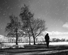 the weight of winter (marianna_a.) Tags: tree woman walking snow landscape urban montréal montreal quebec blackandwhite monochrome mariannaarmata