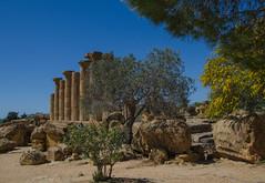 Tempel des Herkules (Paulas Welt 73) Tags: sizilien italien tal der tempel valle dei templi agrigento natur frühling
