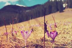 siblings (wichrzu_wichrzu) Tags: forest tatry zakopane spring mountains