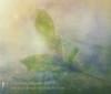 Honeysuckle Wishes (Sylvia Slavin ARPS (woodelf)) Tags: lensbaby velvet textures flare honeysuckle sunflare creative dew bokeh wishes macro