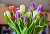Easter Tulips! (ineedathis, Everyday I get up, it's a great day!) Tags: tulips vase bouquet spring flowers colors bulbs dutchbulbs people closeup nikond750