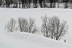 vinterlandskap (KvikneFoto) Tags: landskap natur norge hedmark kvikne snø snow vinter winter