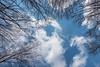 April Reach (johnjmurphyiii) Tags: 06416 clouds connecticut cromwell originalarw shelly sky sonyrx100m5 spring usa yard johnjmurphyiii cloudsstormssunsetssunrises cloudscape weather nature cloud watching photography photographic photos day theme light dramatic outdoor color colour