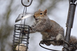 #3 Squirrel - Are you going to help me?